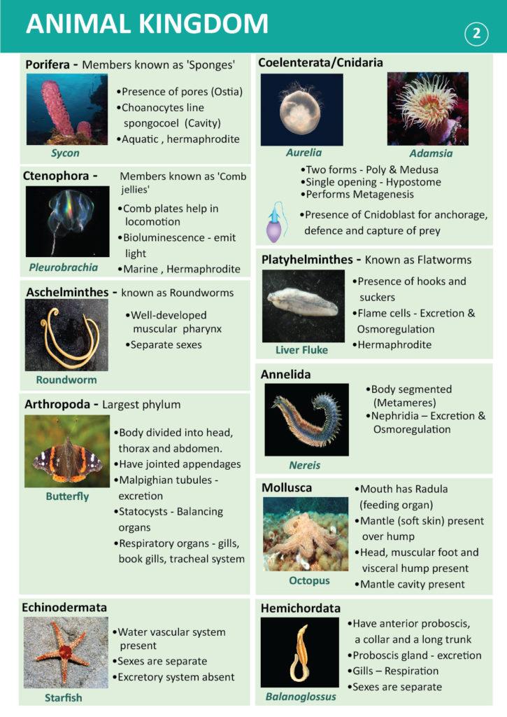 spesies filum platyhelminthes