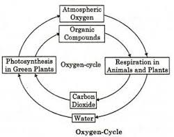 Biogeochemical Cycles: Oxygen cycle, Carbon cycle, Nitrogen cycle