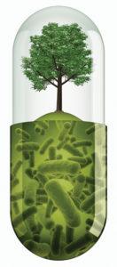 microorganisms in soil