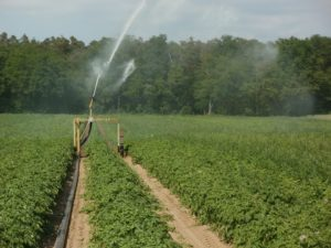 Irrigation: Meaning, Traditional Methods, Modern Methods with Videos