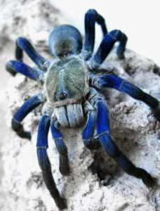 phylum arthropoda characteristics examples solved questions