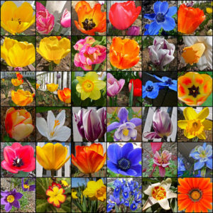 Classification of Flowering Plants:Different Types of