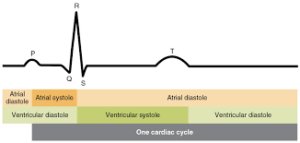 One-Cardiac-Cycle
