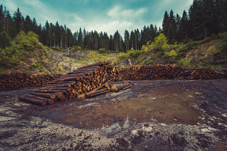Deforestation: Causes, Effects , Measures, Videos and Solved