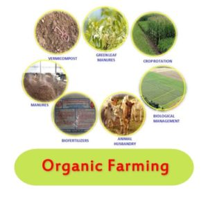 dc14568c99 In essence, organic farming is intimately connected to every principle of  sustainable development. Organic farming is helping us to restore the  ecological ...