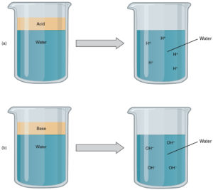 acids and bases litmus paper properties videos and solved questions