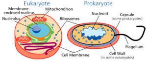 Types-of-cells