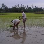 rural livelihoods