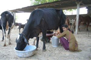Rural Livelihoods in India: Farmers, Land Owners, Labourers, Examples