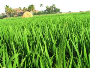 Improvement in Crop Yields: Crops, Videos, Concepts, Examples