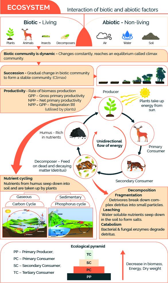 Ecosystem Cheatsheet