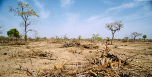 The Dangers of Deforestation – THE HORNET NEWSPAPER