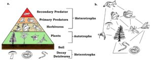 heterotrophic modes of nutrition
