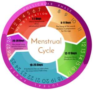 Pregnancy with Menstruation