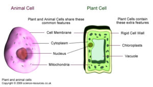 Cell and Tissue