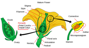 Sexually reproducing flowers