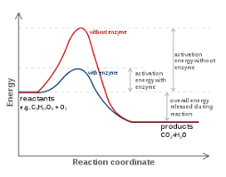 rate of reaction examples