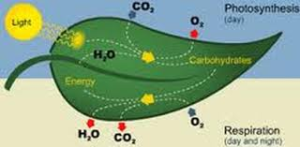 What is the difference between photosynthesis