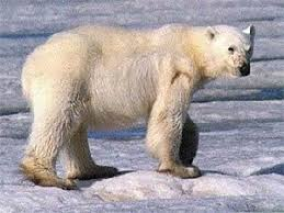 polar bear adaptations to their environment