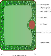 Cell Structure and Functions: Parts, Plant & Animal Cell