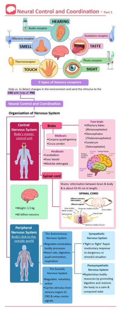 nervous system cheat sheet