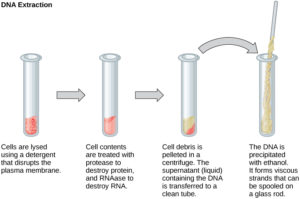 Processes of Recombinant DNA Technology
