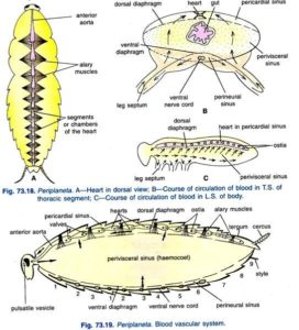 Cockroach: Morphology and Anatomy of Cockroach, Questions
