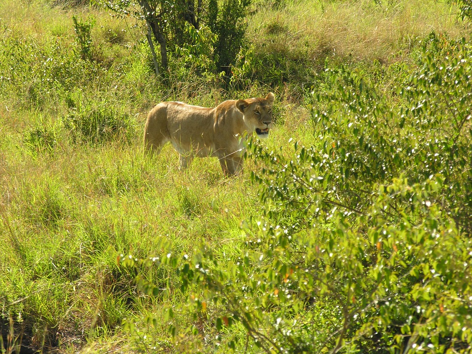 Wildlife in India.