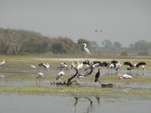 important bird sanctuaries in India
