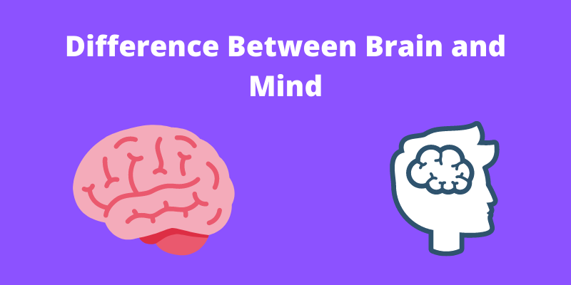 difference between brain and mind